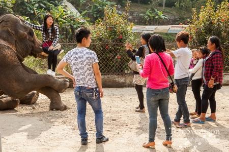 Turister fotograferar sig tillsammans med en elefant