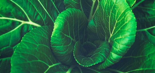 Gröna blad i blomformation sedda uppifrån